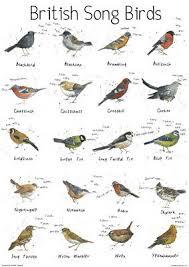 Large British Song Bird Garden Chart Poster Print Wildlife