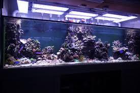 orphek led review large aquarium