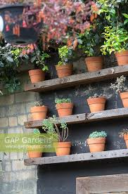 timber shelves with succulents in terracotta pots