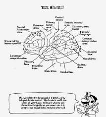 Small Picture Brain Anatomy Coloring Pages with regard to Inspire in coloring