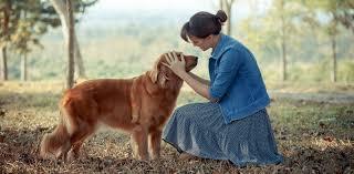 Canine Lymphoma Canine Lymphoma