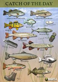 Mad Summer 19 Fishing Tournament Fish Chart Are You Re