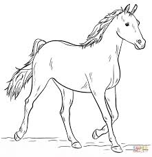 Small Picture Grey Arabian Horse coloring page Free Printable Coloring Pages