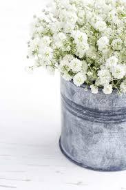 gypsophila bouquet bouquet of baby s breath flowers