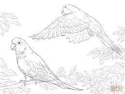 Small Picture Two Quaker Parrots coloring page SuperColoringcom Art