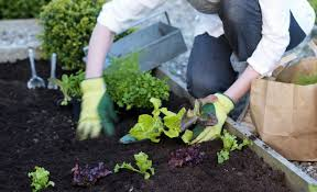 how to start a small garden. How To Start A Small Garden T