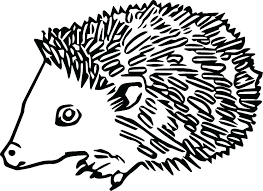 nocturnal animals coloring pages. Delighful Coloring Nocturnal Animal Coloring Pages Animals Free On Art Anima    And Nocturnal Animals Coloring Pages R