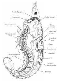 d60e45d5ef82aeaaf119d9b17aa2be92 biology close up 25 best images about high school biology on pinterest mitosis on crayfish dissection worksheet