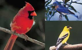 birds and birdhouse