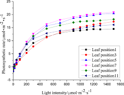 photosynthetic rate prediction model of