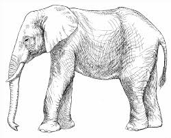 Small Picture For Adults And Piggie Page School Library Stuff Elephant Coloring