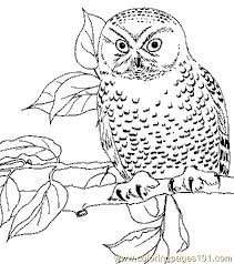 Small Picture 360 best Owl sketches images on Pinterest Owl tattoos Tattoo