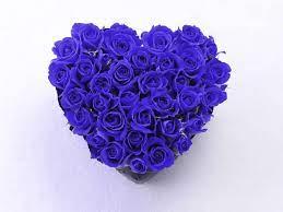Flower Rose Blue Wallpaper Hd - wallpaper
