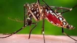 Resultado de imagen para medidas para evitar propagación del Zika en centros penitenciarios