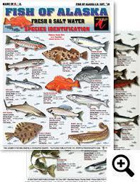Rockfish Identification Chart Saltwater Fishing Charts And Saltwater Fish Identification