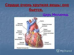 Презентация на тему ГОУ СПО Орехово зуевский медицинский  7 Сердце очень хрупкая вещь оно бьется Царь Меламед