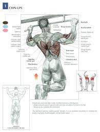 Pull Up Workout Chart Pull Up Workout Routine For Big Powerful Lats Pull Up