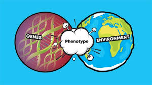 Genotype Vs Phenotype Examples And Definitions Technology