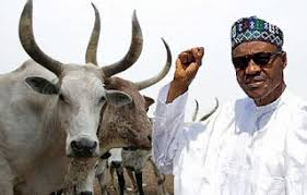 Image result for cattle colony
