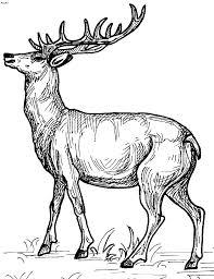 Small Picture deer coloring pages pinterest tumblr google yahoo imgur wallpapers