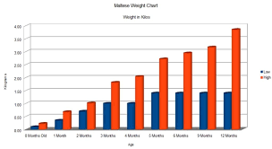 Detailed Chart On Maltese Growth Birth Till Adult