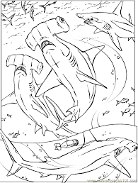 Small Picture Great White Shark Coloring Pages Gallery Of A Great White Shark