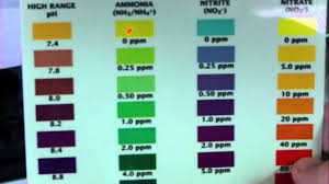 Saltwater Test Kit Chart Api Saltwater Master Test Kit Review Youtube