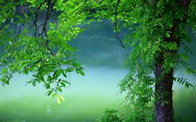 hd desktop wallpaper nature summer. Simple Wallpaper Summer Tree Green Leaves Is An HD Desktop Wallpaper  Posted In Our Free Image Collection Of Nature Wallpapers Inside Hd Desktop Wallpaper Nature U