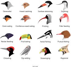 Bird Beak Chart Free Beak Clipart Chart Bird Download Free Clip Art On