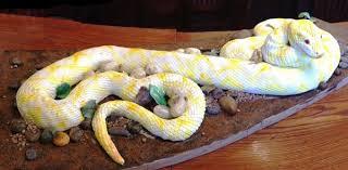 foot edible burmese python snake cake