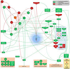 Defense Acquisition Life Cycle Wall Chart Frontiers Unraveling The Initial Plant Hormone Signaling