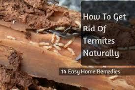 natural termite killer. Beautiful Natural In Natural Termite Killer S