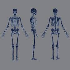 Negative Human Skeleton Chart Blue Color Vector Download