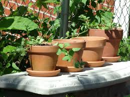 food green herb produce ceramic backyard brown craft garden pottery concrete terracotta houseplant potted gardening decorative culture
