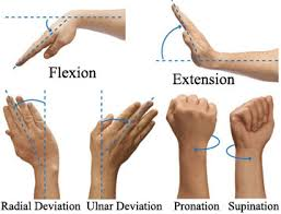 Finger Rom Chart Simple Solutions For Poor Wrist Mobility Invictus Fitness
