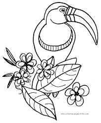 Small Picture Tropicbird Animal Coloring Pages Tucan On A Branch Color Page