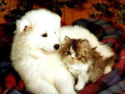 cute kittens and puppies together. Brilliant Cute Kittens  For Cute And Puppies Together B