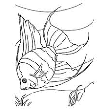 Small Picture Top 25 Free Printable Fish Coloring Pages Online