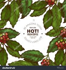 coffee plant illustration vector. Interesting Coffee Coffee Tree Illustration Engraved Style Vintage Coffee  Frame Vector Illustration With Plant Illustration F