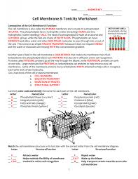 Cell Membrane And Transport Study Guide Answer Key Passive ...