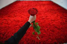 Imagini pentru trandafiri