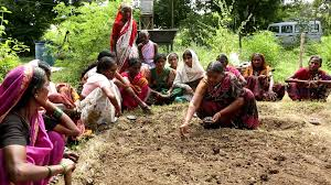 Kitchen Garden Project A Documentary On Kitchen Garden Project In English Youtube