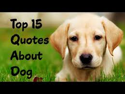 Quotes About Dogs Love Adorable Best 48 Dog Quotes For People Who Love Dogs YouTube