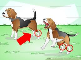 dog leg pain home remedies