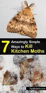 kill kitchen moths