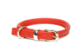 dogs horses rolled leather dog collars