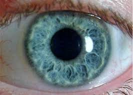Normal Pupil Size Chart The Pupillary Pupil Size Normal And Assessment Perrla Eyes