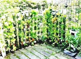 container vegetable gardening ideas. container gardening ideas garden amp landscaping creative vegetable uk g