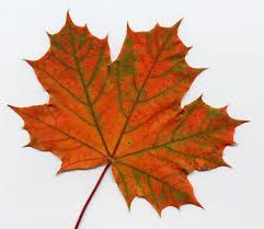 Fall Leaf Chart Digital Transitions 4 Bar Charts Fall Leaf Activity