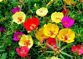 Hasil gambar untuk tanaman hias